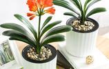 6款扔進花盆就能活的綠植,吸甲醛防輻射,你家有了嗎
