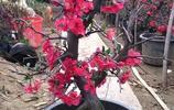難怪花卉市場人山人海的搶,原來立秋最暢銷這些名木樹樁盆景絕了