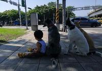 帶狗狗出門遇紅燈,媽媽喊指令讓它們坐下,卻發現多了一個小身影