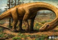 什麼恐龍比鯨還大?最大的恐龍是什麼?