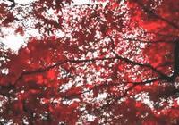 獨享紅葉,人少景美,我只告訴你……楓葉與美食不可辜負!