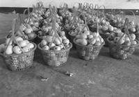 枇杷大豐收價格很實惠 今年塘棲枇杷管夠!