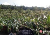 1日貴州赫章縣六曲河鎮發生風雹災害