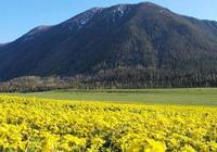 新疆擬建穿越阿爾泰山公路 三分之二在山裡跑