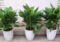 """廚房油煙大?養上這""""3種植物"""",吸油煙、淨空氣,家人更健康!"""