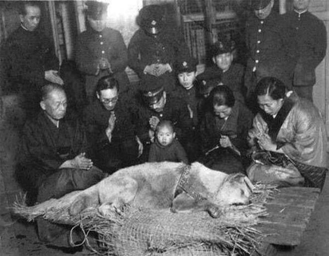 老照片:圖3是忠犬八公的葬禮,圖6是真實的十三姨