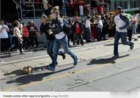 多倫多猛龍冠軍遊行發生槍擊案!兩人受傷,兩名嫌疑人被逮捕