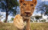 攝影師鏡頭下動物的奇妙瞬間,你被哪張萌到了?