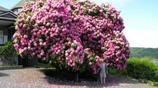 盤點世界上最美的樹 中國也有一顆