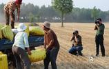 菏澤麥收現場,除了農民忙收穫,還有一道別樣的風景