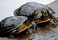 成也烏龜,敗也烏龜,李世民因為烏龜成功發動玄武門政變