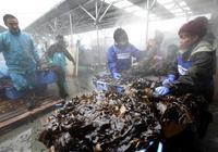 日本面臨半世紀來最嚴重海苔荒 採購價格漲4成