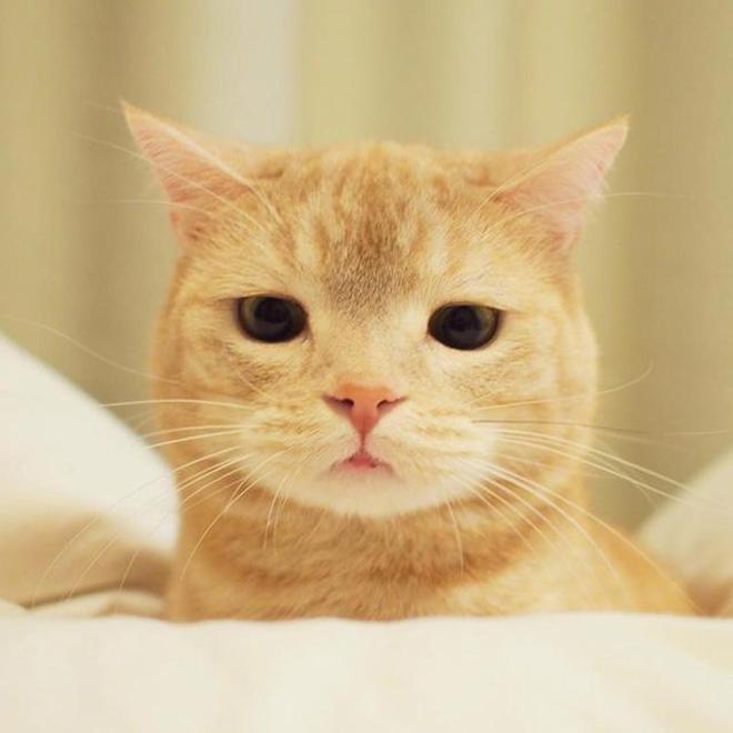 誰說橘貓只有大胖貓,看這隻喵又可愛又高顏值~
