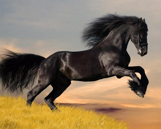 動物圖集——飛馳駿馬