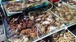 秋季,海鮮最肥美的時候,海邊有哪些海鮮值得吃,而且物美價廉?