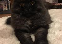 父親給愛貓剪了個新發型,女兒看了直呼太醜,網友們卻覺得很有範