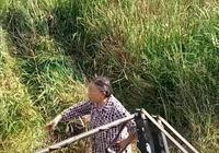 為什麼有些農村田地會大量丟荒?應該怎麼辦?