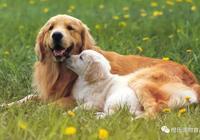 適齡狗狗未做絕育?那它出現這幾個行為你就得注意了