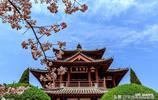 春天影像:西安青龍寺的櫻花攻略在這裡,分享給您