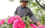 山西7旬老人耗時40年建牡丹園,有人出價50萬不賣,這是啥情況