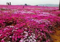 賞花摘果帶火沂源鄉村遊