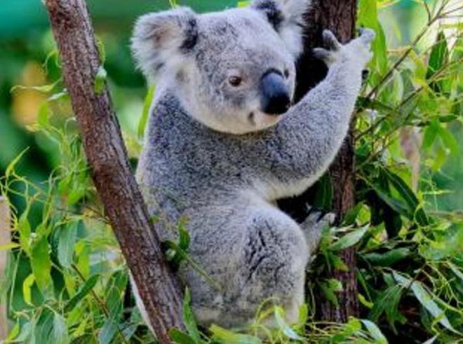 地球上10大最萌最可愛的動物,國寶大熊貓上榜,你覺得它萌嗎?