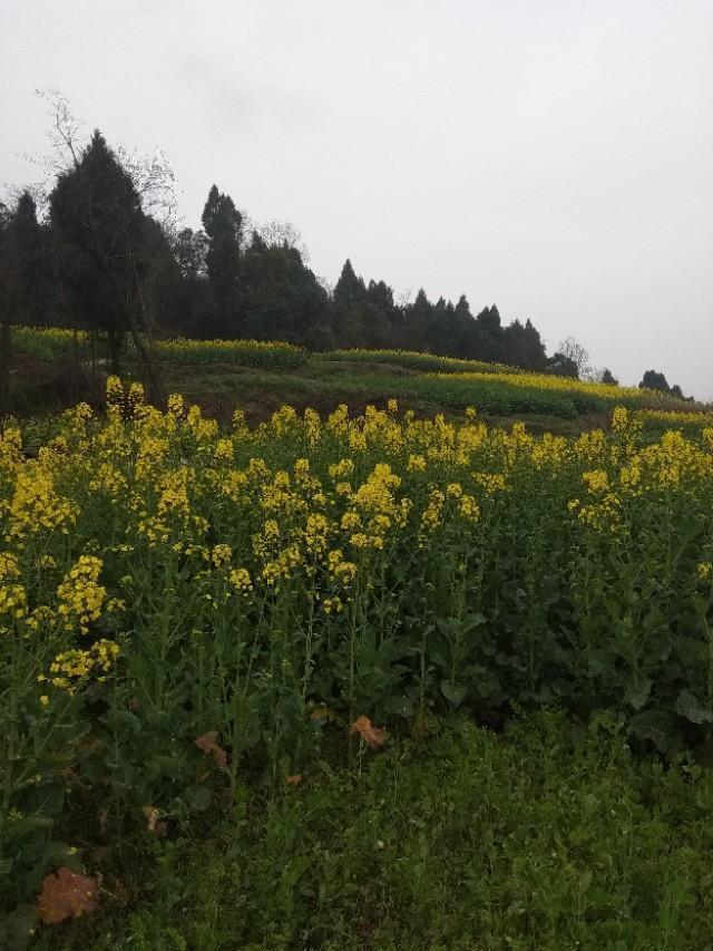 七律:雨後踏春