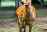 靈籤占卜:哪隻鹿快生寶寶了?測11月你身上有哪種好運發生!