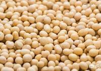 大豆種植者補貼如果每畝達到320元,農民種大豆有效益嗎?