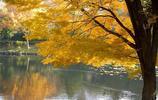 最美的秋色美景,請打開看看吧!