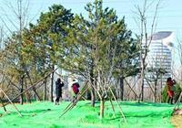 家門口體驗森林野趣!北京東南新增三大郊野公園