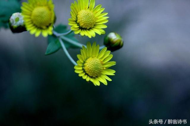 《七律4首 · 秋》文/賈誼輝