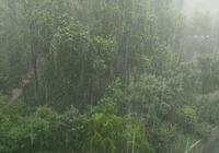 淄博的雨很大,淄博姑娘的這個舉動卻很暖
