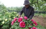 7旬老人耗時40年建牡丹園,用牡丹花做美食,如今坐在地頭收門票