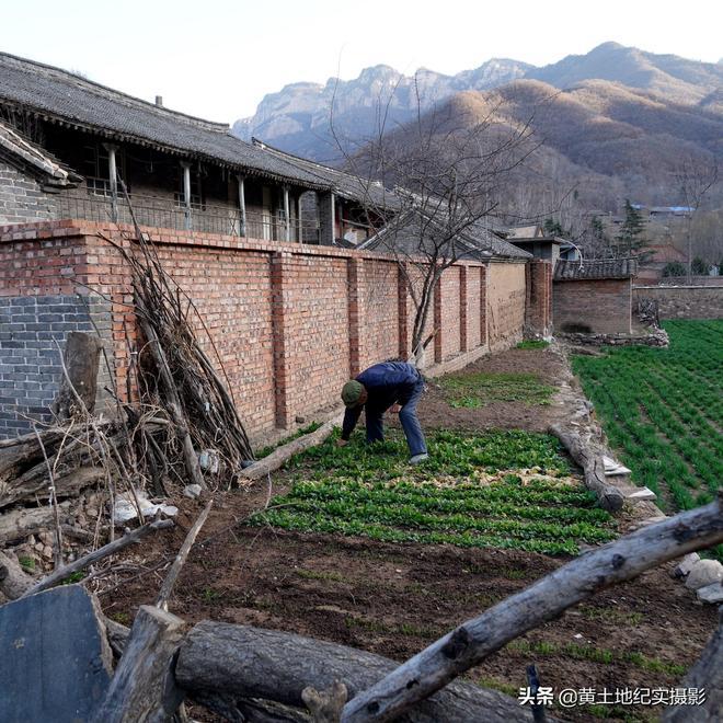 山西農村8旬老人喜歡吃1種美食酸菜面,1天不吃看他成啥樣