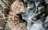 農民養泰迪,泰迪生小泰迪,認小貓為母,最後卻被嫌棄
