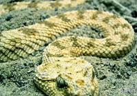 蛇仙故事:雄蛇勇救母蛇