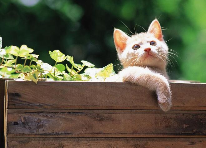 日常吸貓 人類 你願意做我的鏟屎官嗎?可愛的主子,沉迷於貓的美貌 一本滿足,喵星人壁紙