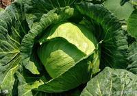 抗癌蔬菜有哪些,這些蔬菜在抗癌蔬菜排行榜中名列前茅