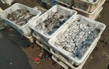 吃海鮮來青島 碼頭上黃花魚5塊一斤 紅頭魚10元4斤 攤主數錢忙