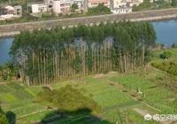 農民私自在耕地上種樹,這屬於違法行為嗎?該如何界定?