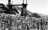 山西地區鐵礦資源豐富,1958年,大鍊鋼鐵運動在此開展得紅紅火火