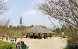 成都這座公園的櫻花最受歡迎,但其它風景也不差,值得一遊