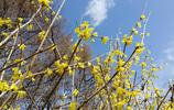 花開迎春,冰城變得更美麗