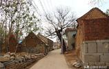 章丘這個村除了有棵600多年很出名的流蘇樹,還有棵400多年老槐樹