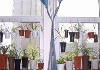 """家裡的蘭花植株不開花長得慢,怨你沒用對""""肥"""",1月1次特方便"""