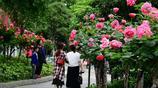 廣元城區規劃綠道345公里,你走過幾公里?