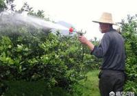 果樹一定要施葉面肥嗎?果樹葉麵肥有哪些作用?