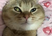 貓咪的眼睛好像怪怪的,結果醫生只說了句話就讓網友全笑翻了!