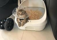 闢謠:貓咪沒事愛玩貓砂不全是因為好奇心,還有可能是這幾個原因